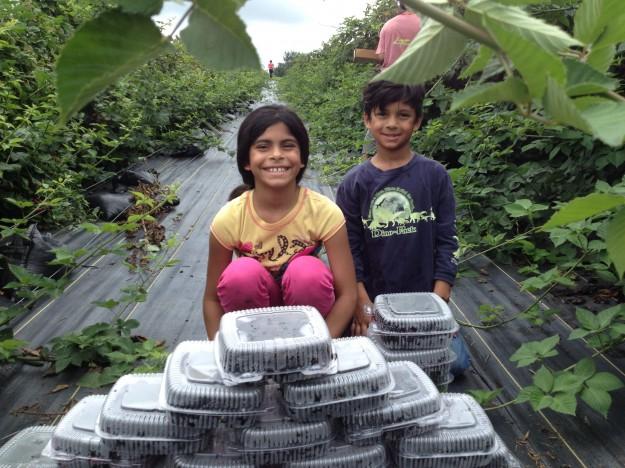 Kids picking blackberries