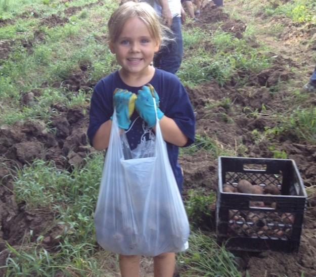 Little girl gleaning potatoes