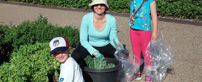 Gleaners gleaning kale, chard, lettuce
