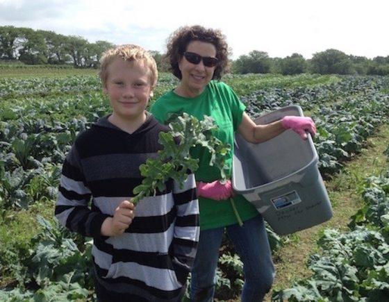 Volunteers gleaning