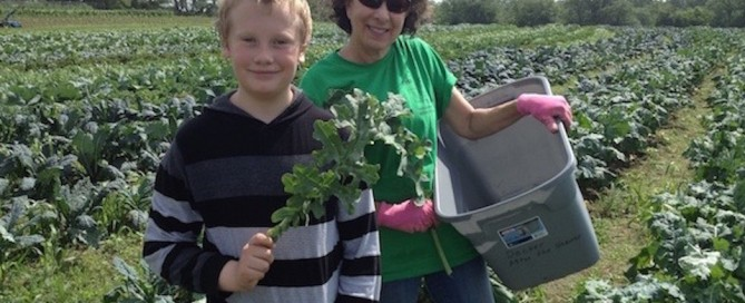 Gleaning kale