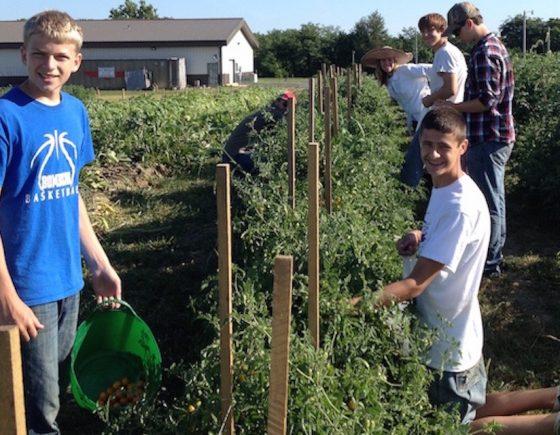 Volunteers picking produce