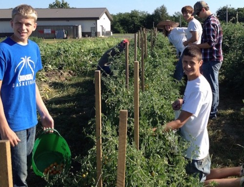 Planting tomatoes in KCK tomorrow; Gleaning kale, chard, lettuce in Kingsville, MO on June 2