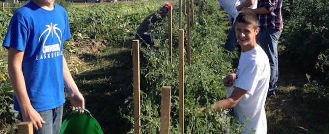 Teens gleaning tomatoes