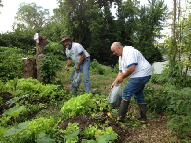KCP&L gleaning lettuce
