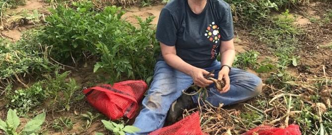 Onion gleaner