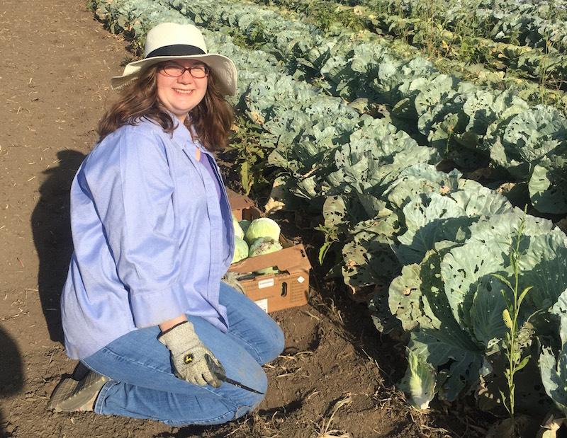 Volunteer Picking Cabbage