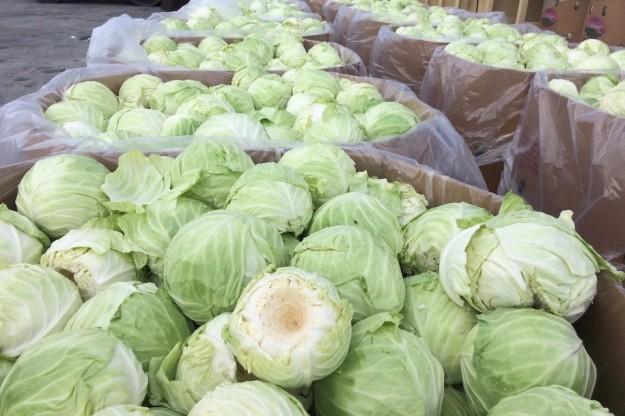 Cabbage Inc