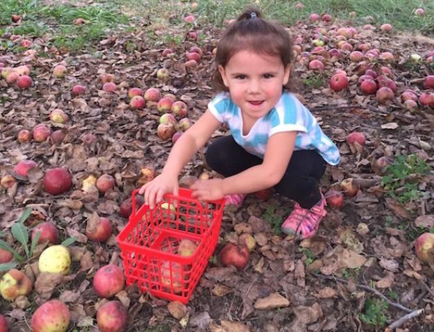 Little girl apple gleaning