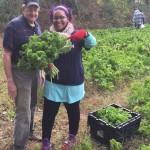 John Hornbeck gleaning greens