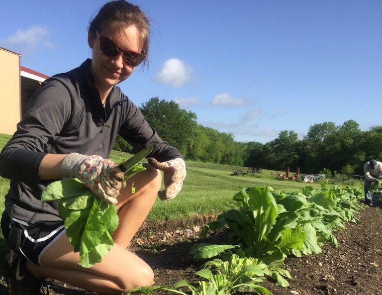 Fresh Produce Gleaning