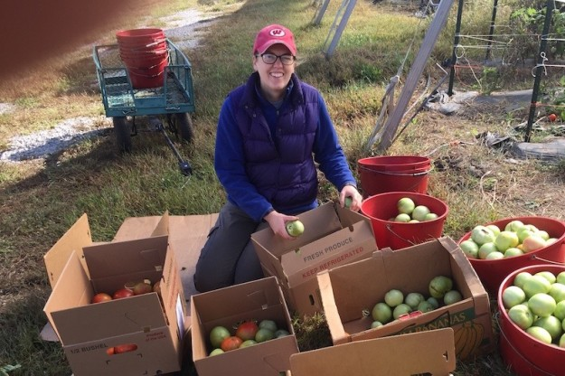 Emily gleaning tomatoes