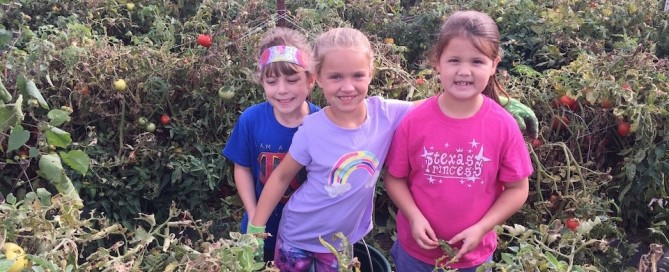 Young tomato gleaners