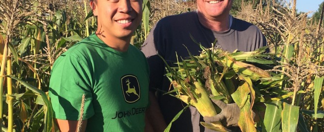 Corn gleaners John Deere