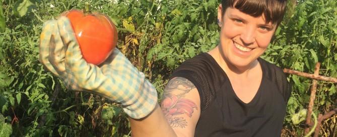 Tomato gleaner