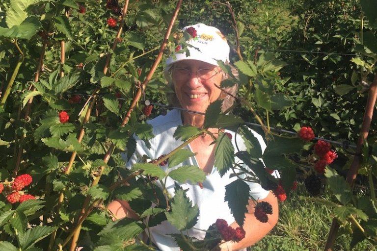 Fresh Blackberry Gleaning