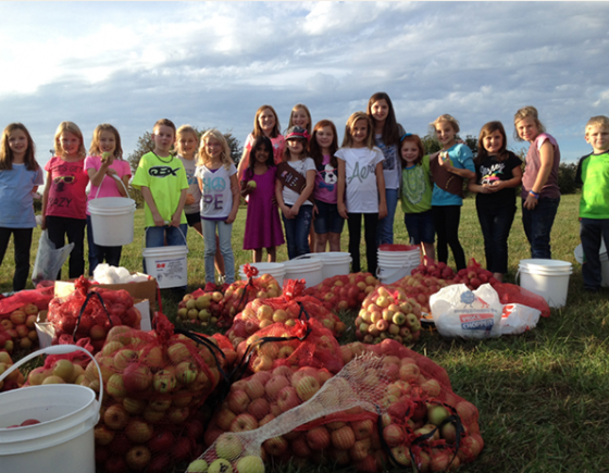 Apples picked by volunteer children