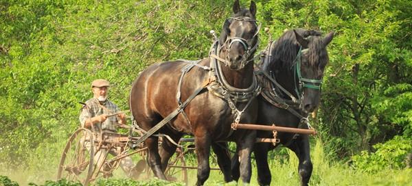 Karbaumer draft horse farming