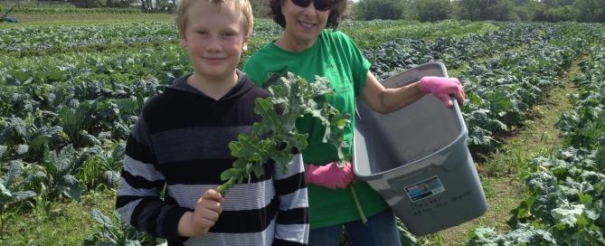 volunteers harvesting kale for food pantries