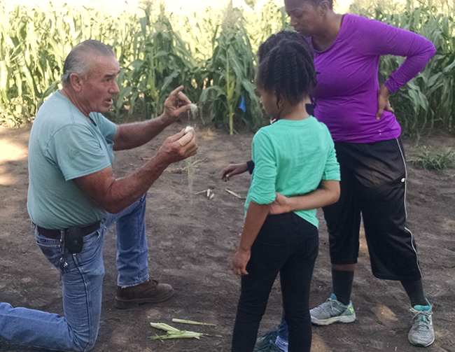 Man knelt down giving two kids a corn lesson
