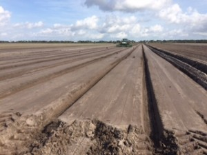 Cabbage rows--planting